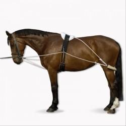 Enrênement équitation cheval Polyvalent blanc