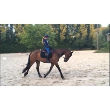 Balance Test Horse Pilot X Femme Avis Pantalon D'équitation zXxwqZ4Z